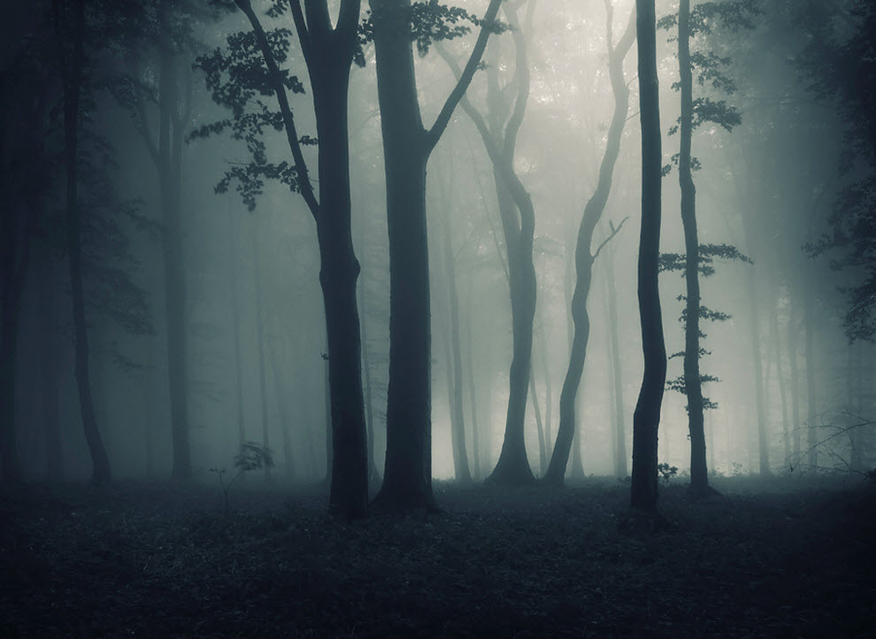 фон туманный лес чтобы совместить