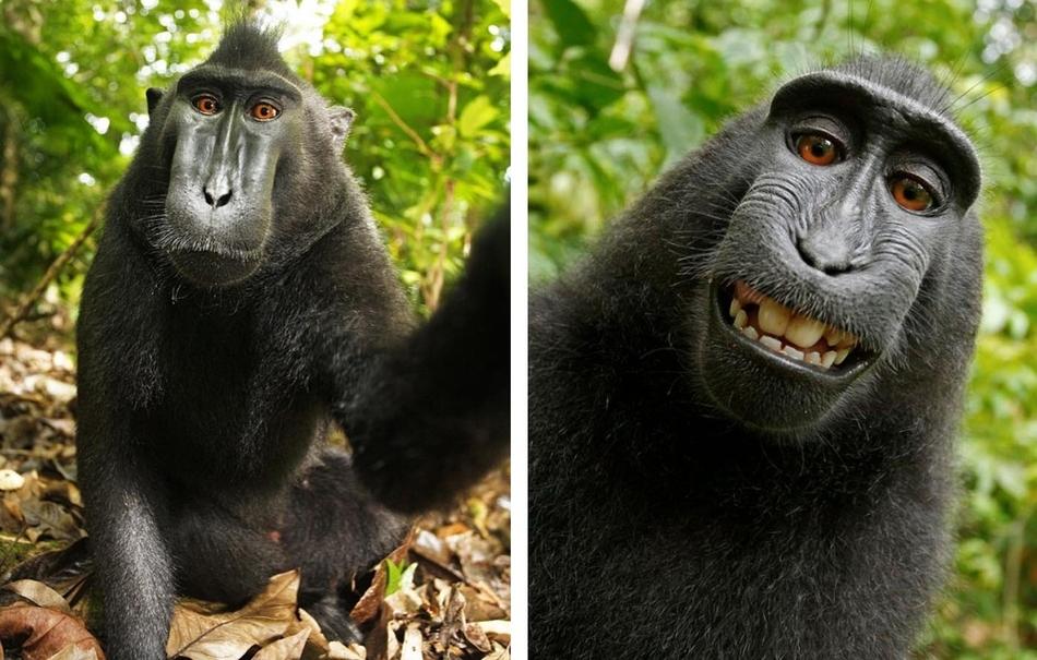 1178 50 лучших фотографий животных за 2011 год