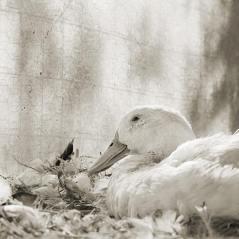 12104 Фотопроект Исы Лешко Пожилые животные