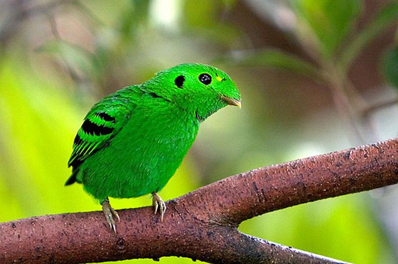 12113 40 прекрасных фотографий птиц