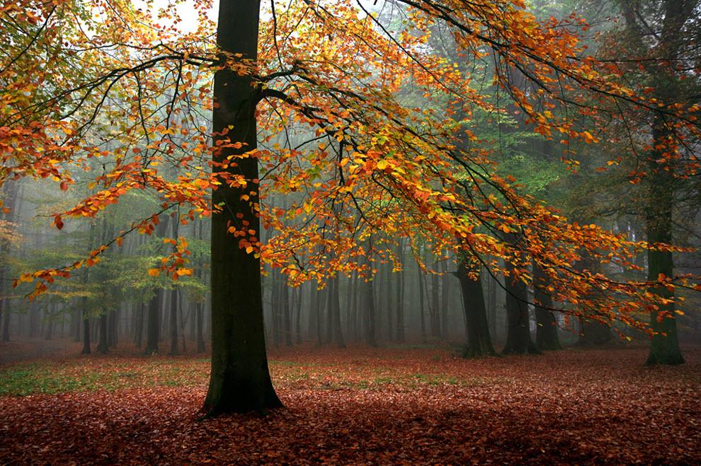 1241 100 изумительных фотографий тумана (часть 2)
