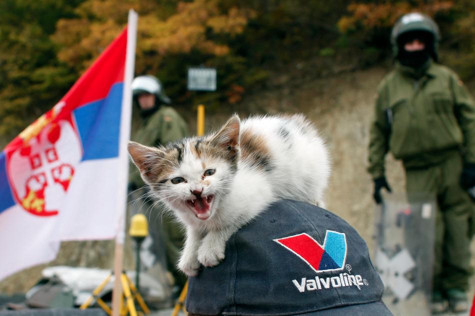 1246 50 лучших фотографий животных за 2011 год