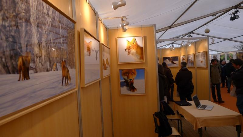 1319 Лисы Камчатки. Фестиваль фотографов дикой природы Montier en Der