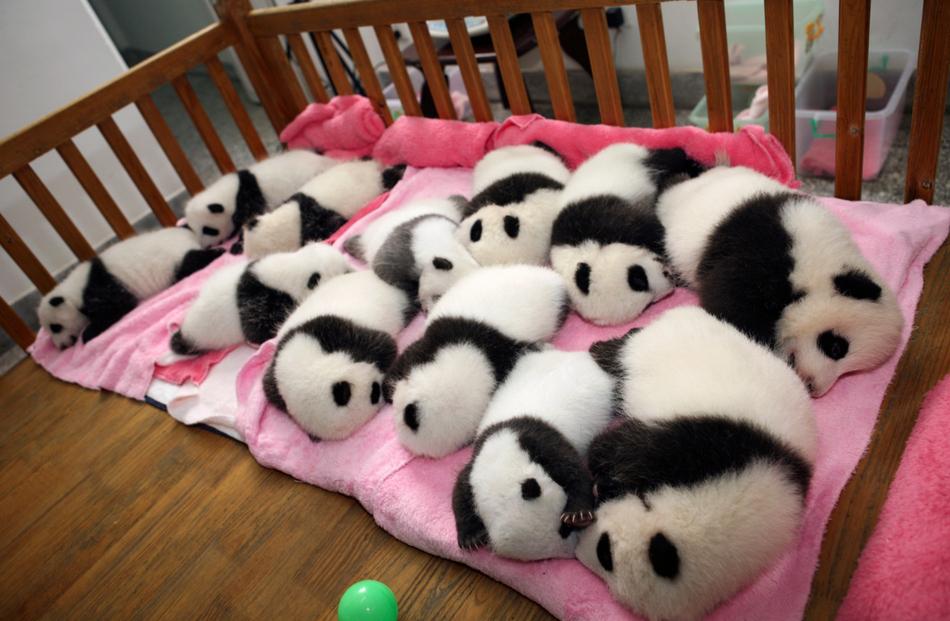 1345 50 лучших фотографий животных за 2011 год