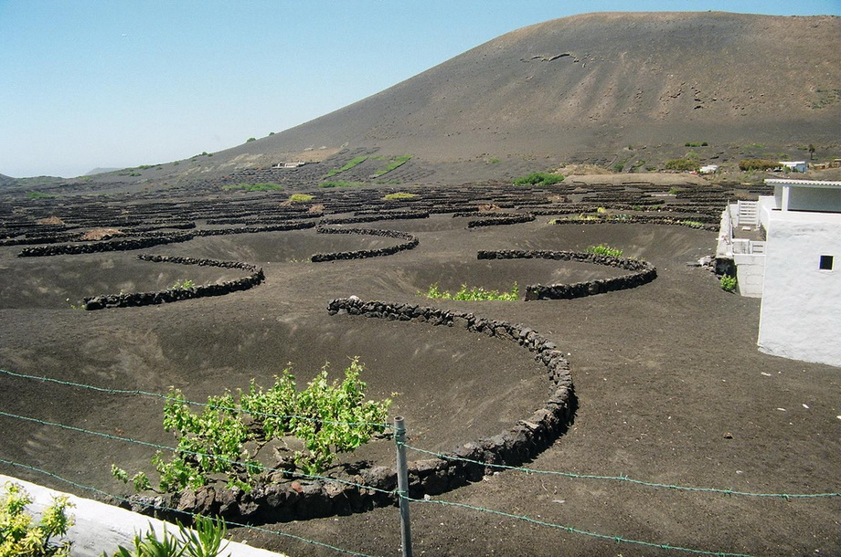 1375 Вулканические виноградники острова Лансароте