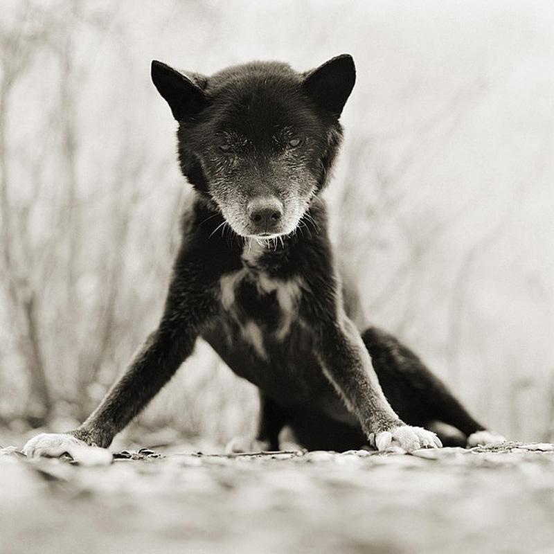 1382 Фотопроект Исы Лешко Пожилые животные