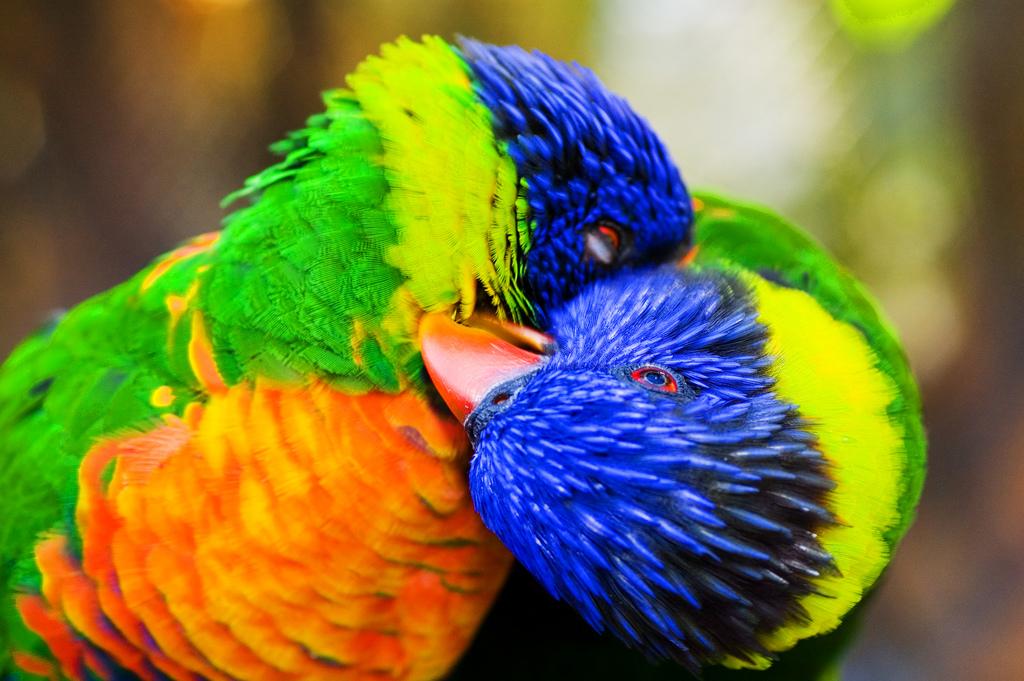 1393 40 прекрасных фотографий птиц
