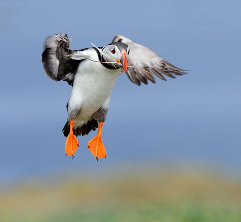 1394 40 прекрасных фотографий птиц