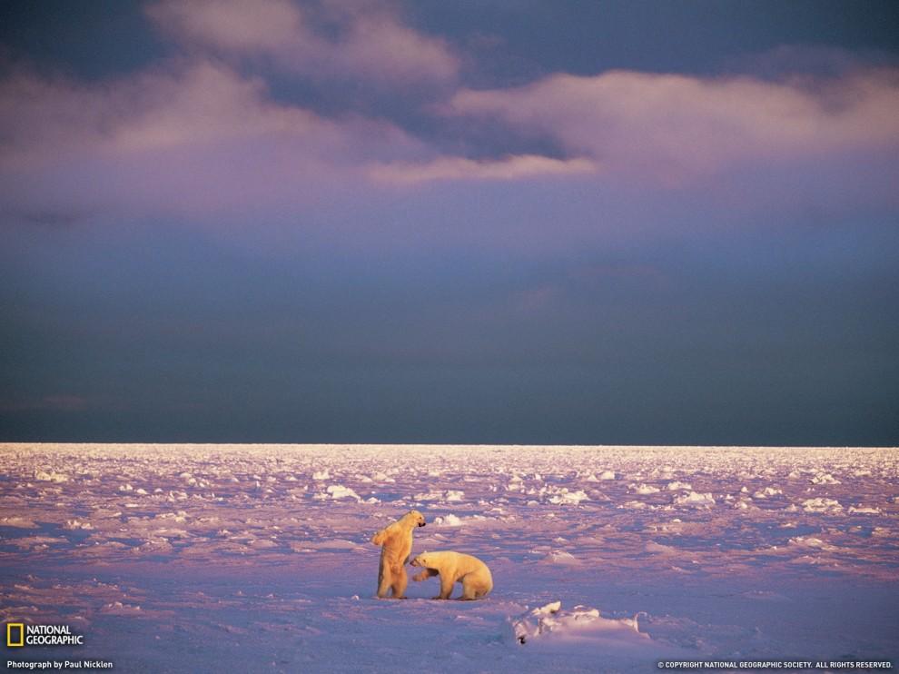 143 990x742 Лучшие фото ноября от National Geographic
