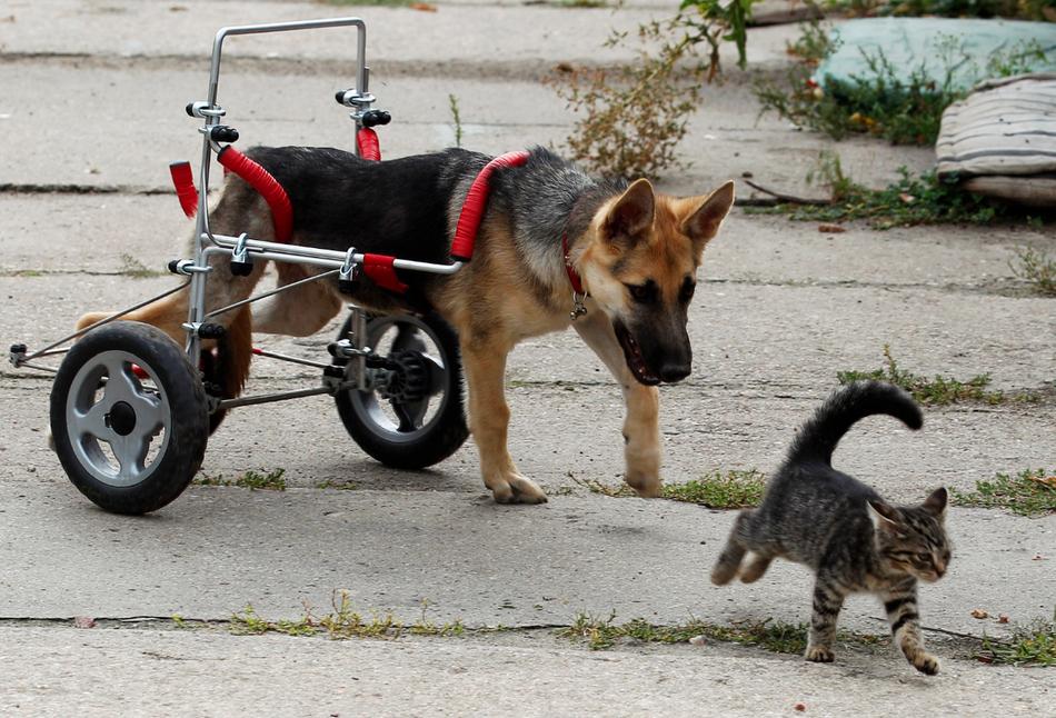 1441 50 лучших фотографий животных за 2011 год