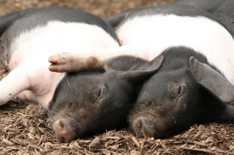 Учимся обниматься у животных (фото)