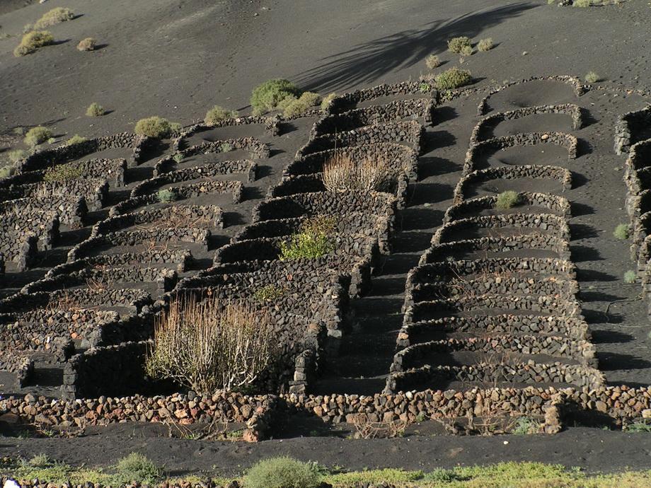 1471 Вулканические виноградники острова Лансароте