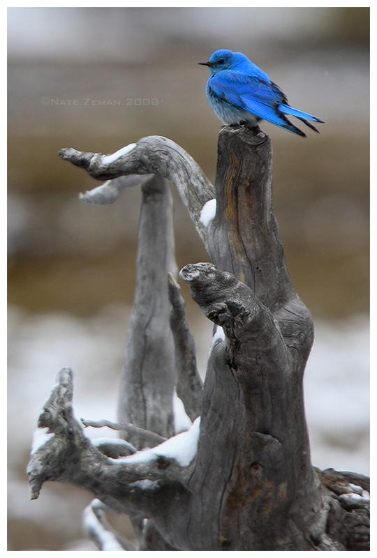 1487 40 прекрасных фотографий птиц