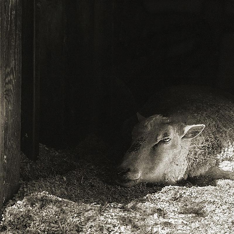 1575 Фотопроект Исы Лешко Пожилые животные