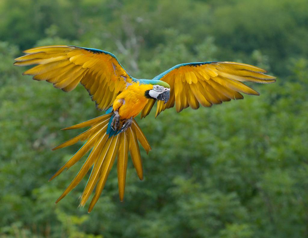 1584 40 прекрасных фотографий птиц