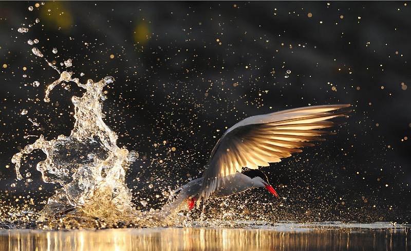 1626 Лучшие фотографии дикой природы 2011