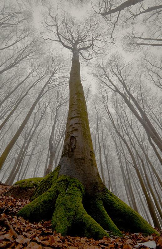 1630 100 изумительных фотографий тумана (часть 2)