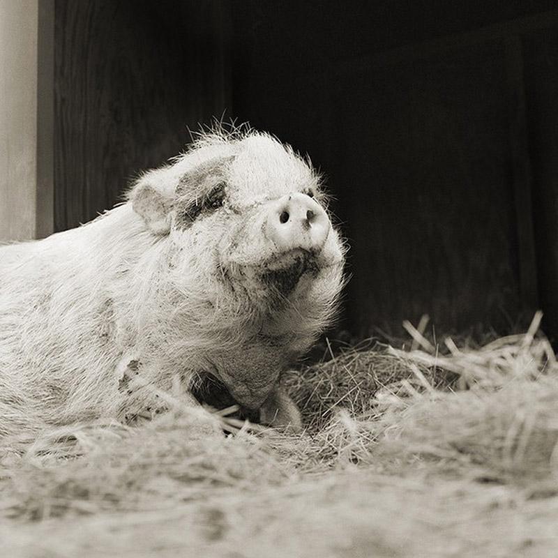 1668 Фотопроект Исы Лешко Пожилые животные