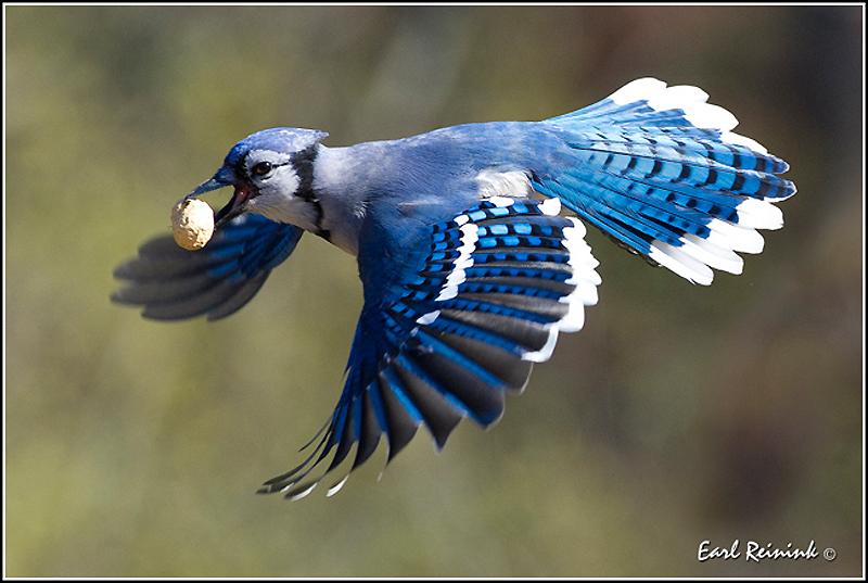 1676 40 прекрасных фотографий птиц
