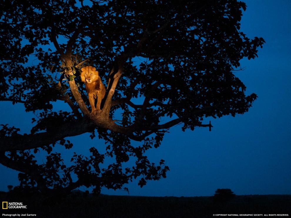 173 990x742 Лучшие фото ноября от National Geographic