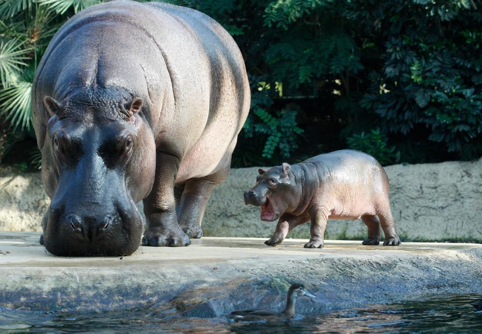 1730 50 лучших фотографий животных за 2011 год