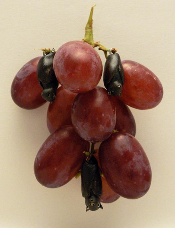 1735 Смешные фрукты