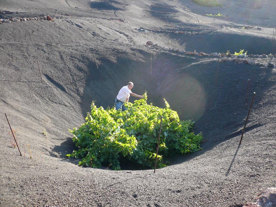 1756 Вулканические виноградники острова Лансароте