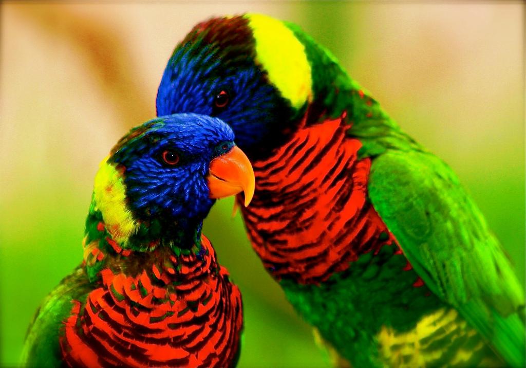 1770 40 прекрасных фотографий птиц