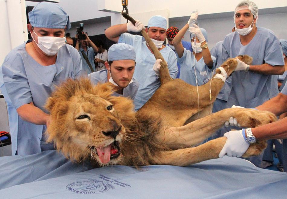 1826 50 лучших фотографий животных за 2011 год