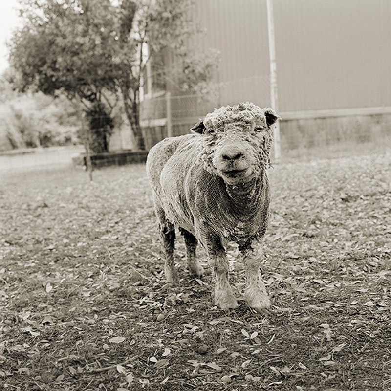 1858 Фотопроект Исы Лешко Пожилые животные