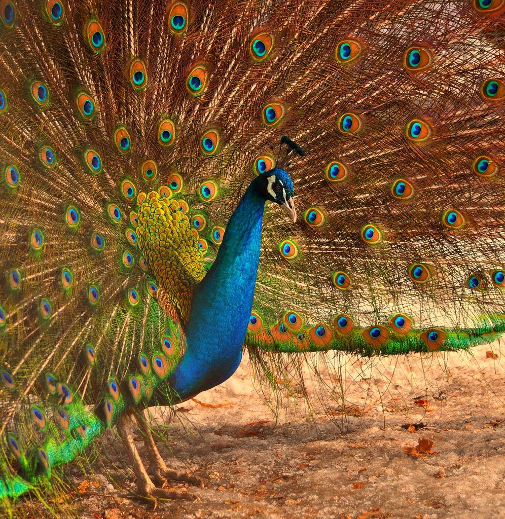 1866 40 прекрасных фотографий птиц