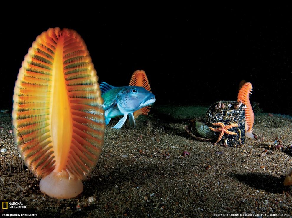201 990x742 Лучшие фото ноября от National Geographic
