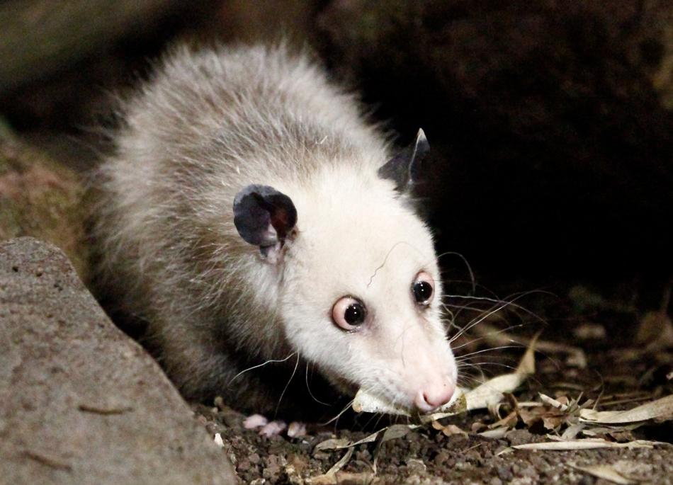 2022 50 лучших фотографий животных за 2011 год