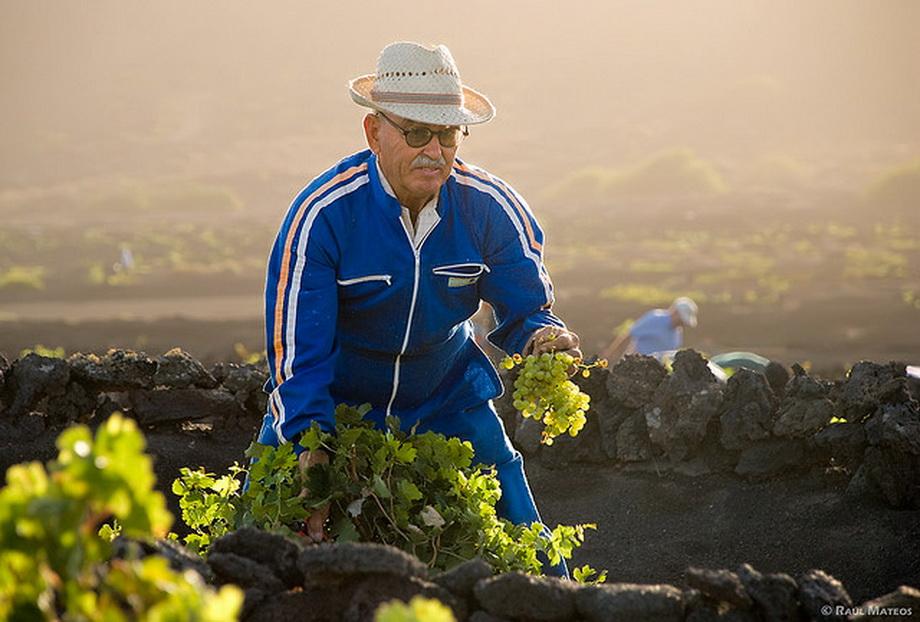 2040 Вулканические виноградники острова Лансароте