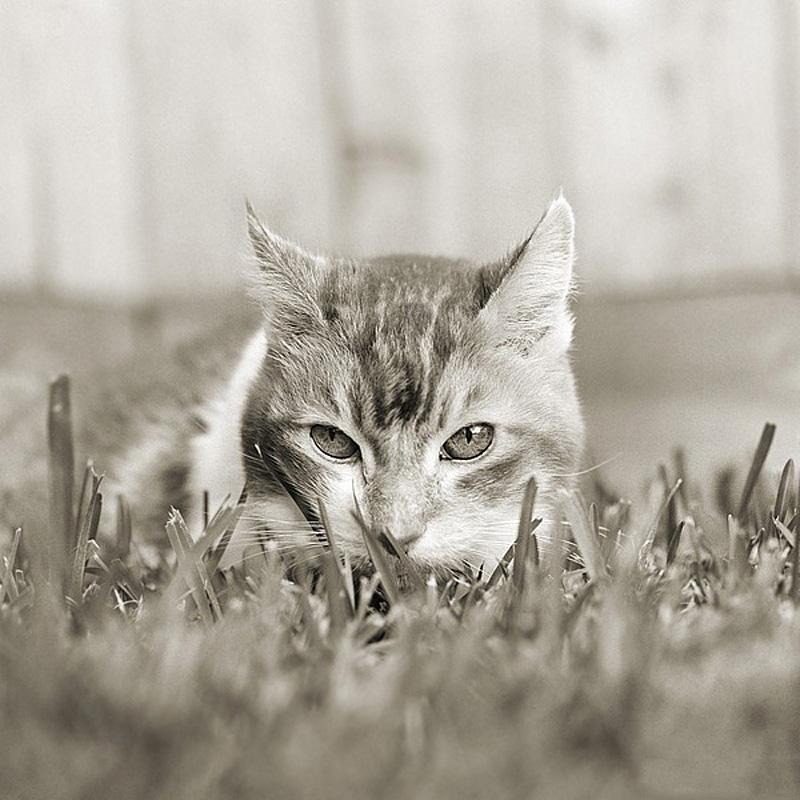 2045 Фотопроект Исы Лешко Пожилые животные