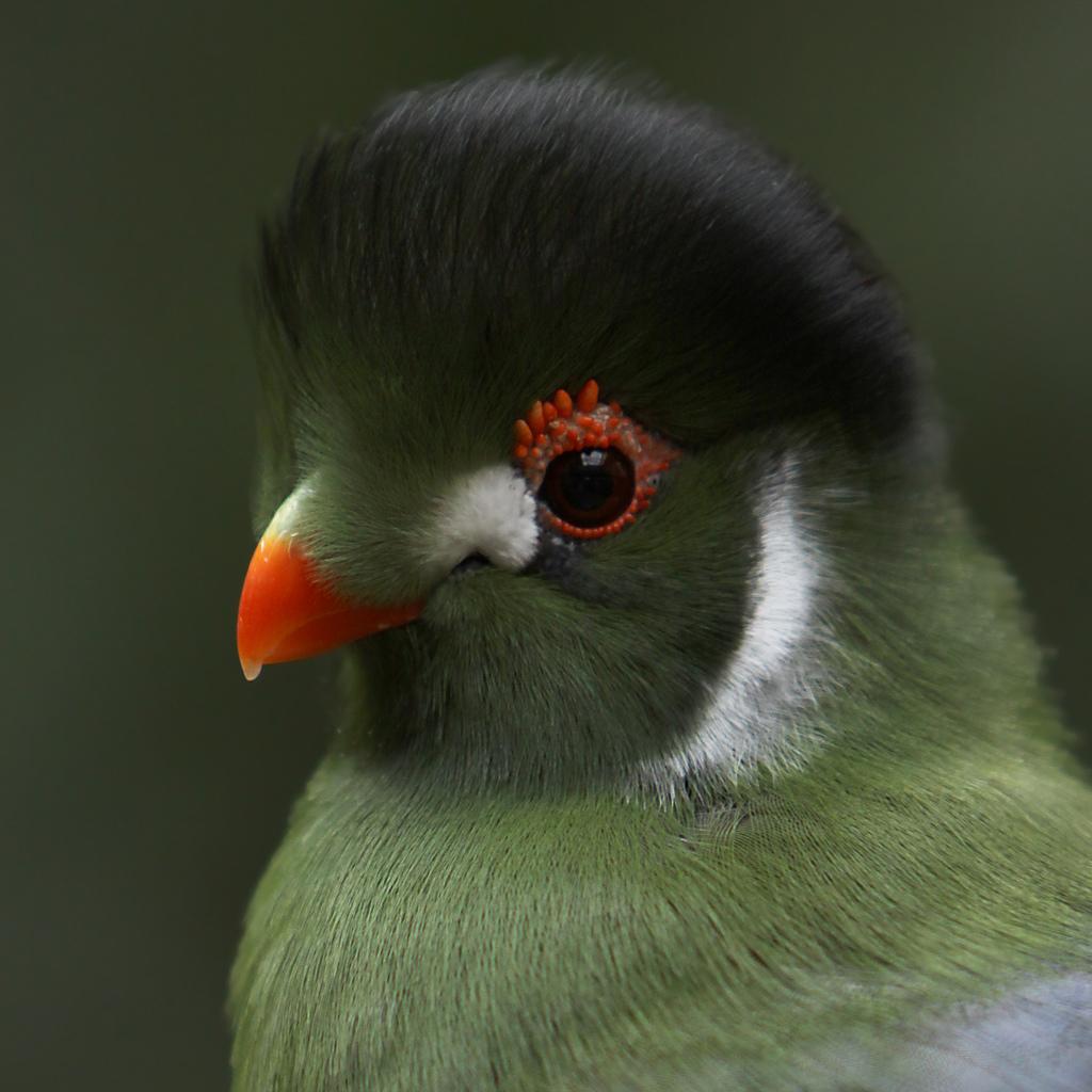 2052 40 прекрасных фотографий птиц