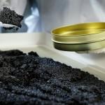 Икра осетра – черное золото Израиля
