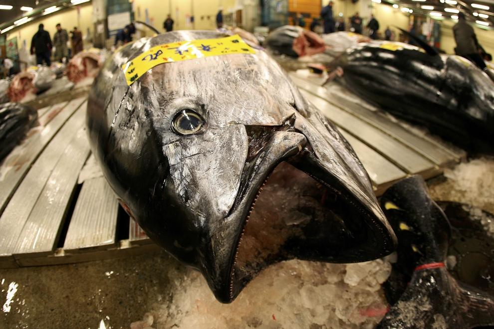 2089 Рыбный рынок Цукидзи