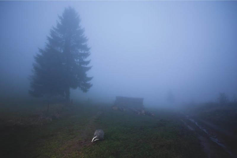 2108 Лучшие фотографии дикой природы 2011