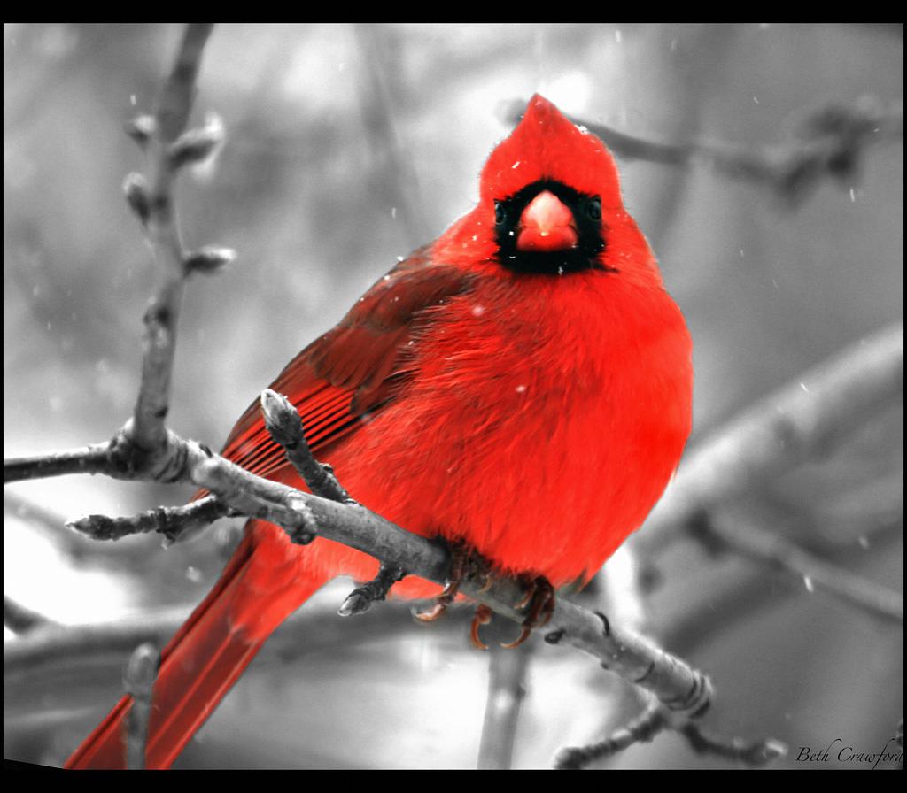 21104 40 прекрасных фотографий птиц