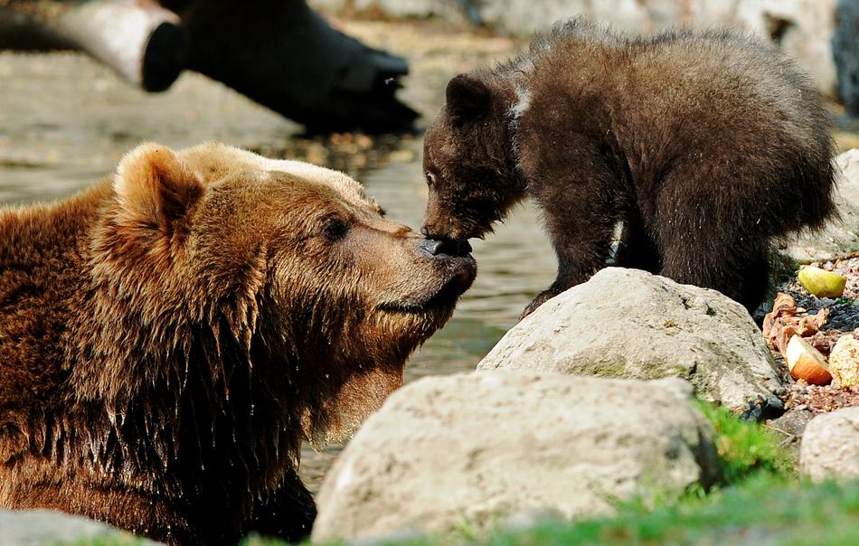 2139 50 лучших фотографий животных за 2011 год