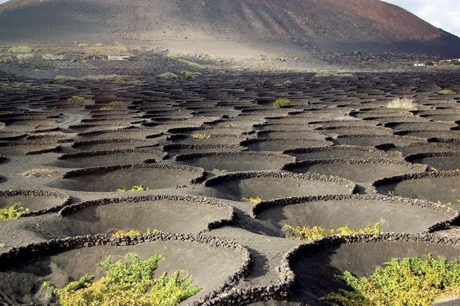2189 Вулканические виноградники острова Лансароте