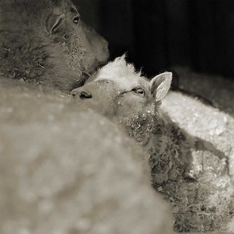 2200 Фотопроект Исы Лешко Пожилые животные