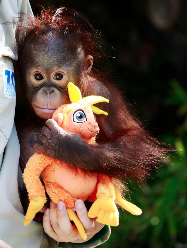 2223 50 лучших фотографий животных за 2011 год