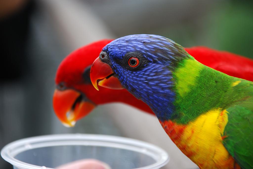 2248 40 прекрасных фотографий птиц
