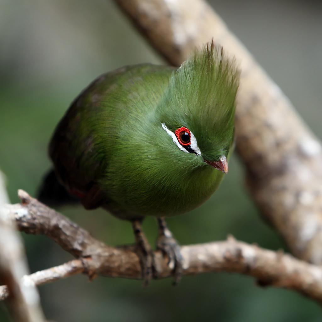 2249 40 прекрасных фотографий птиц