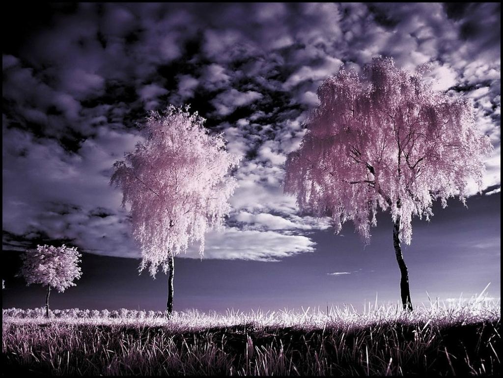 2279 Инфракрасная фотография