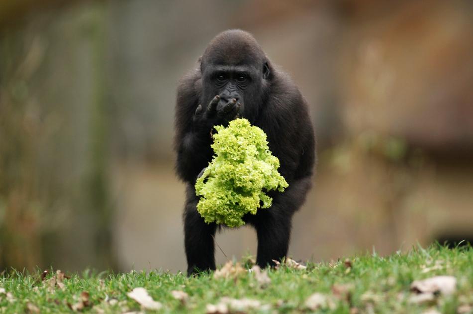 2322 50 лучших фотографий животных за 2011 год