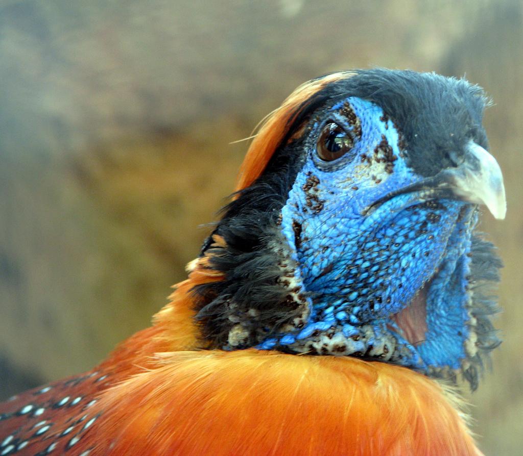 2344 40 прекрасных фотографий птиц