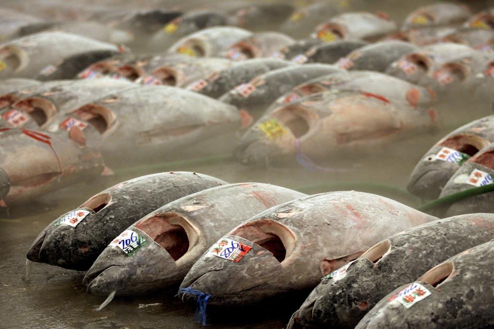 2385 Рыбный рынок Цукидзи